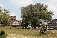 15-07-20-Teotihuacan-by-RalfR-N3S 9404.jpg