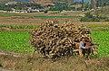 1658 - Nordkorea 2015 - von Käsong nach Pjöngjang (22358133244).jpg