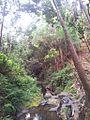 1 Vallee Ferney indigenous forest b.jpg