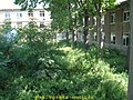 2002年 原大连工学院无线电系 yard - panoramio.jpg