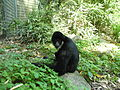 2011-05-24-zoo-mulhouse-11.jpg