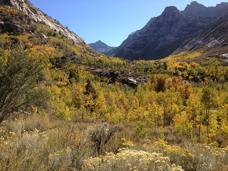 File:2013-10-08 14 52 06 View up Thomas Canyon towards Mount Fitzgerald from Lamoille Canyon Road near Thomas Canyon Campground.JPG