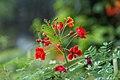 2016 Singapur, Ogrody botaniczne (028).jpg