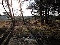 2920 Kalmthout, Belgium - panoramio (12).jpg