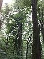 3981 Bunnik, Netherlands - panoramio - Alexandros Georgiou (5).jpg