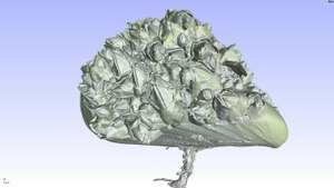 File:3D flight around a µCT scan of a Mytilus covered with Balanidae.ogv