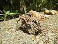 4217Foods Common houseflies Ants of the Philippines 29.jpg
