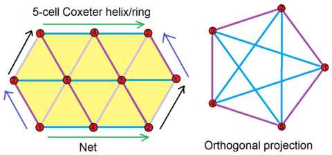 5-cell 5-ring net.png