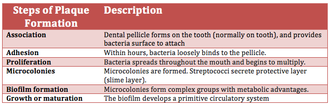 Dental plaque - Simple description of the different steps involved in plaque formation