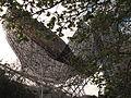 77 Peix de Frank Gehry.jpg