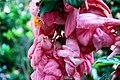 A magia das vegetações do meu Sergipe. 05.jpg