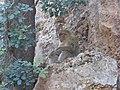 A monkey near Ouzoud falls.jpg