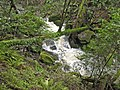 A whitewater cascade on Cataract Creek just below the falls. - panoramio.jpg
