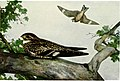 A year with the birds (1916) (14752232275).jpg