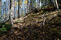 Abineau Trail is a steep 1,800 foot climb over two miles up the slopes of the San Francisco Peaks through Abineau Canyon. The trail meets the Waterline Trail at the top, which can be followed down to (21871305588).jpg