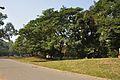 Acharya Jagadish Chandra Bose Indian Botanic Garden - Howrah 2011-01-08 9712.JPG