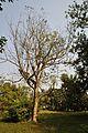 Acharya Jagadish Chandra Bose Indian Botanic Garden - Howrah 2011-01-08 9868.JPG