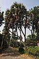 Acharya Jagadish Chandra Bose Indian Botanic Garden - Howrah 2011-01-08 9887.JPG