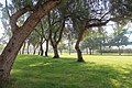 Adana, Reşatbey Mh., Seyhan-Adana, Turkey - panoramio (40).jpg