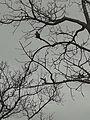 African Tree.jpg