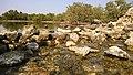 Al khore Mangrove forest (Purpule Island) - panoramio (19).jpg