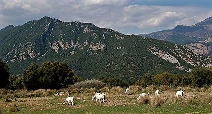 Alta Garrotxa.jpg