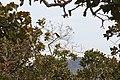 Alto Araguaia - State of Mato Grosso, Brazil - panoramio (1094).jpg