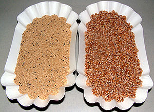 Amaranth (left) and wheat (right) grains