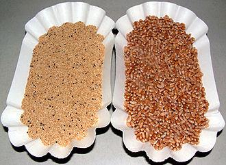 Amaranth grain - Amaranth grain (left) and wheat (right)