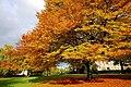 Amazing autumn trees in the Hexham Abbey Garden - panoramio - somaliayaswan.jpg