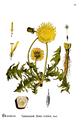 American Medicinal Plants-0521.png