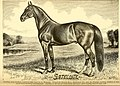 American horses and horse breeding - a complete history of the horse from the remotest period in his history to date. The horseman's encyclopedia and standard authority on horses, embracing breeds, (14598445027).jpg