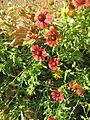 Amin al-Islami Park - Trees and Flowers - Nishapur 046.JPG