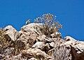An Andean Flicker on Flickr!.jpg