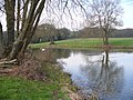 Anglers' Pond, North-west of Kingsley. - geograph.org.uk - 340613.jpg