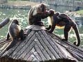 Animais do Jardim Zoológico de São Paulo 25.JPG