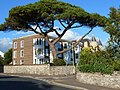 Apartments with magnificent tree, Exmouth - geograph.org.uk - 2554381.jpg