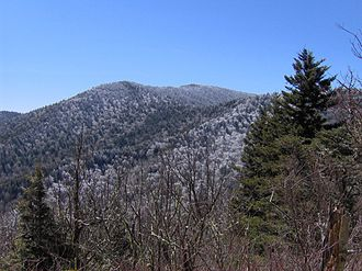 Mount Guyot (Great Smoky Mountains) - Mt. Guyot, looking south from the Appalachian Trail