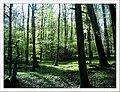 April Glottertal Black Forest - Master Seasons Rhine Valley 2013 - panoramio (3).jpg
