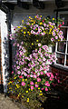 Arkesden flower hanging basket, Essex, England.jpg