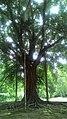 Arsitek pohon alam.jpg