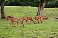 At Chester Zoo 2019 053.jpg