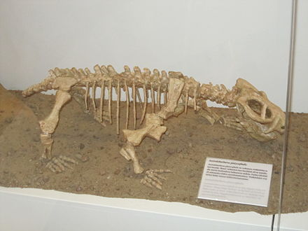 Australobarbarus