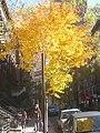 Autumn 51st Street (5176876100).jpg