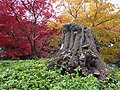 Autumn in Stanley Park - Vancouver, BC, Canada - 01 (6349697282).jpg