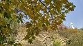 Autumn season in Butanic Garden فصل پاییز در باغ بوتانیکال تفلیس 18.jpg