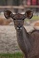 BIG ears (3959549397).jpg