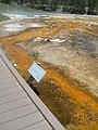 Bacteria Mat in Yellowstone DyeClan.com - panoramio.jpg