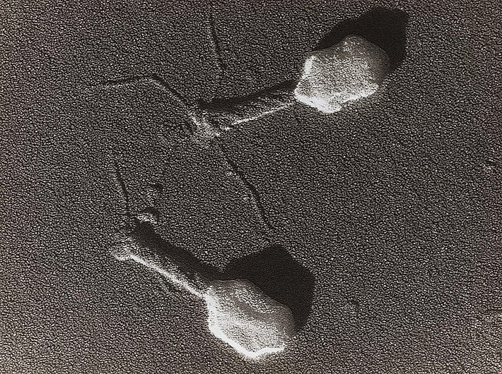Bacteriophage.jpg
