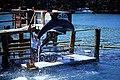 Bahamas 1988 (293) Paradise Island Paradise Lake (24070660981).jpg